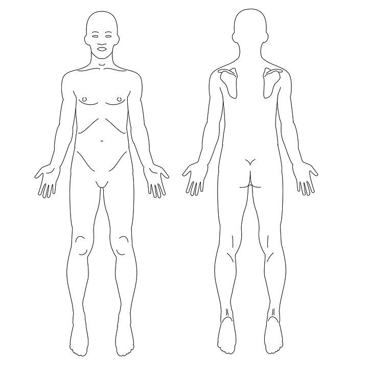 schéma anatomique du corps humain de face et de dos